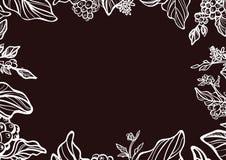 Molde do ramo da árvore de café com feijões de café Vetor botânico do desenho Foto de Stock