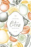 Molde do vintage Projeto tirado mão da tinta com citrinas Ilustração do vetor no quadro Esboço exótico altamente detalhado do fru ilustração do vetor