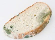 Molde en el pan Imagenes de archivo