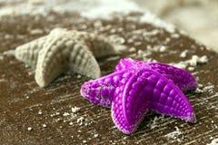 Molde en la dimensión de una variable de una estrella de mar Foto de archivo libre de regalías