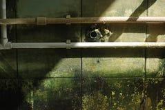 Molde en las paredes Fotografía de archivo libre de regalías