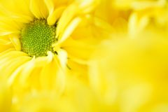 Molde floral Imagens de Stock