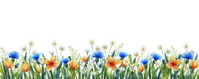 Molde floral da aquarela para seu projeto Wildflowers pintados à mão da aquarela Centáurea, camomila e grama foto de stock