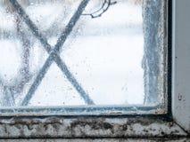 Molde fungoso condensado en ventana fotos de archivo libres de regalías