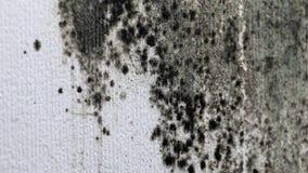 Molde na parede branca filme