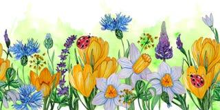 Molde pintado à mão da aquarela de flores da mola ilustração royalty free