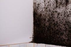 Molde preto foto de stock