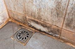 Molde que crece en las tejas de la ducha Foto de archivo libre de regalías