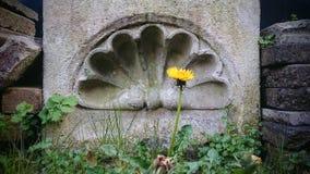 Moldeado de Architecrural y flor del diente de león Imagenes de archivo