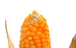 Molded corn Royalty Free Stock Image