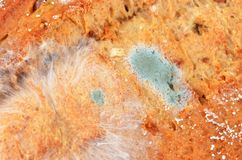 Molded loaf of bread. Close up shot Royalty Free Stock Photos