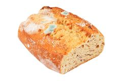 Molded loaf of bread. Isolated on white background Stock Photography