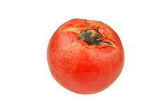 Molded red tomato. Isolated on white background Royalty Free Stock Photography