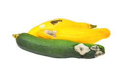 Molded vegetable marrow (zucchini). Isolated on white background Royalty Free Stock Photography