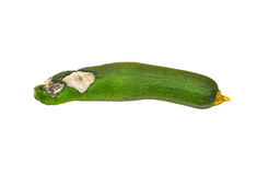 Molded vegetable marrow (zucchini). Isolated on white background Royalty Free Stock Images