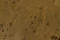 Moldes del gusano de la lombriz para cebo en la playa imagenes de archivo