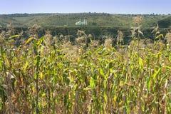 Moldova, Orhei Vechi, campo de milho e igreja Fotos de Stock Royalty Free