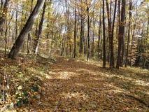 Moldovan lasy Obrazy Stock
