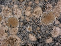 Molds on the granite rock. Heap of natural molds on the granite rock royalty free stock photos