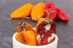 Moldy και ζαρωμένα πιπέρια Ανθυγειινός, αποσυνθέστε, χαλασμένο λαχανικό στοκ εικόνες με δικαίωμα ελεύθερης χρήσης