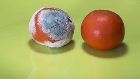 Moldy και φρέσκο tangerine Στοκ εικόνα με δικαίωμα ελεύθερης χρήσης