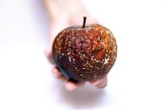 Moldy μήλο στο χέρι της Στοκ Εικόνα