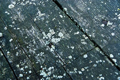 moldy παλαιό δάσος Στοκ Φωτογραφίες