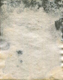 Moldy παλαιά σύσταση εγγράφου watercolour Στοκ φωτογραφία με δικαίωμα ελεύθερης χρήσης