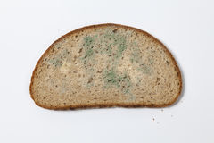 Moldy коричневый хлеб Стоковое Фото