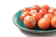 Moldy томаты на крупном плане плиты Стоковые Изображения RF