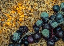 Moldy фокус виноградин Стоковое фото RF