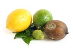 высушенные свежие лимоны белят moldy известью Стоковое Изображение RF