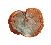 Moldy apple isolated on white Stock Photo
