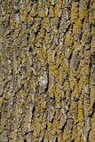 Moldy Bark Royalty Free Stock Photography