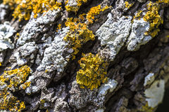 Moldy bark and lichen Stock Image