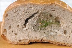 Moldy bread. Dried moldy bread on the kitchen board Royalty Free Stock Photos