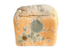 Moldy bread. Isolated Royalty Free Stock Images