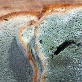 Moldy Bread Royalty Free Stock Photos