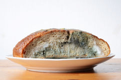 Moldy bread Royalty Free Stock Image