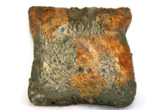 Moldy bread. To date, the Bad and the Beautiful Royalty Free Stock Photography