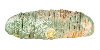 Moldy bread Royalty Free Stock Photos