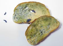 Moldy bread with worms Stock Image