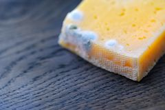 Moldy cheese on wood, contrast crust Royalty Free Stock Images