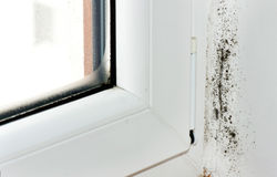 Moldy Corner. The mold is attacking the wall at a window Stock Images