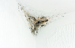 Moldy Corner. The mold is attacking the wall at a window Royalty Free Stock Images