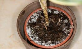 Moldy flowerpot Royalty Free Stock Photos