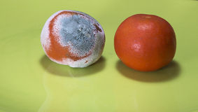 Moldy and fresh tangerine Royalty Free Stock Image