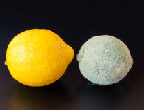 Moldy and Healthy Lemons Royalty Free Stock Photography