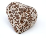 Heart Shaped Moldy Chocolate. Moldy heart shaped chocolate  on white background Stock Images