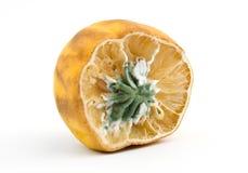 Moldy lemon. Isolated over white Stock Photo